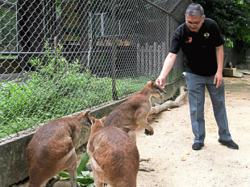Tiger cubs named Puntum, Teja and Bayu at Taiping Zoo