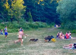 Nudist gives chase as brazen boar nabs laptop