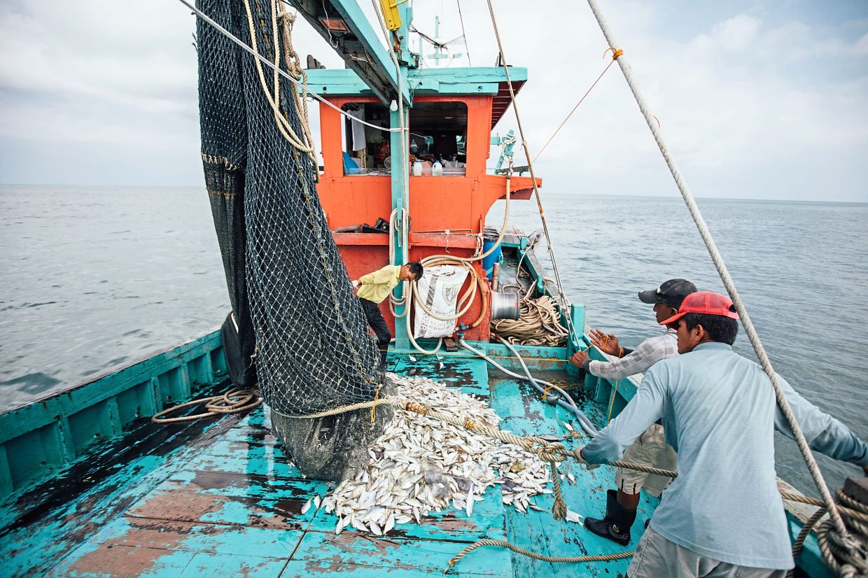 Online seafood delivery platforms typically work directly with fishermen to ensure that the day's haul is delivered faster and more efficiently to end users in the Klang Valley. — MyFishman