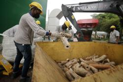 Singapore: $18 million worth of ivory destroyed; new centre to combat illegal wildlife trade