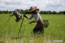 Myanmar's agricultural exports earn over US$3.3bil in first 10 months of FY 2019-20