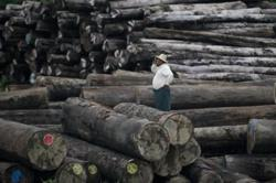 Over 103 tonnes of illegal timber seized in S. Myanmar in one week