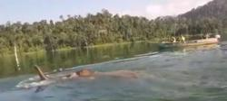 Wild elephant spotted swimming at Terengganu National Park