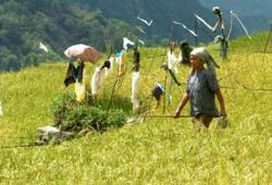 Asian Development Bank approves US$400 million to help boost farm incomes in Philippines