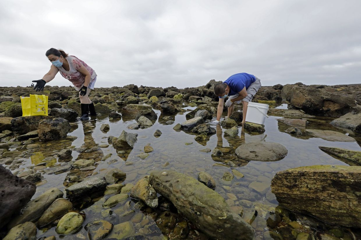 Marine creatures are harvested from a tidepool at White Point.