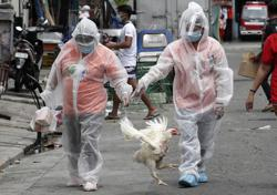 Philippines imposes ban on chicken products from Brazil due to Covid-19 scare