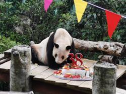 China: World's oldest captive giant panda celebrates 38th birthday