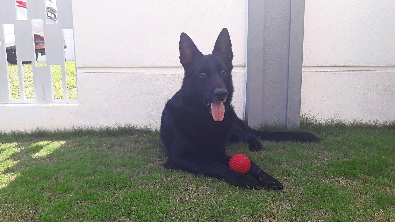 Max avec sa boule de fraise.  - Ellen Whyte