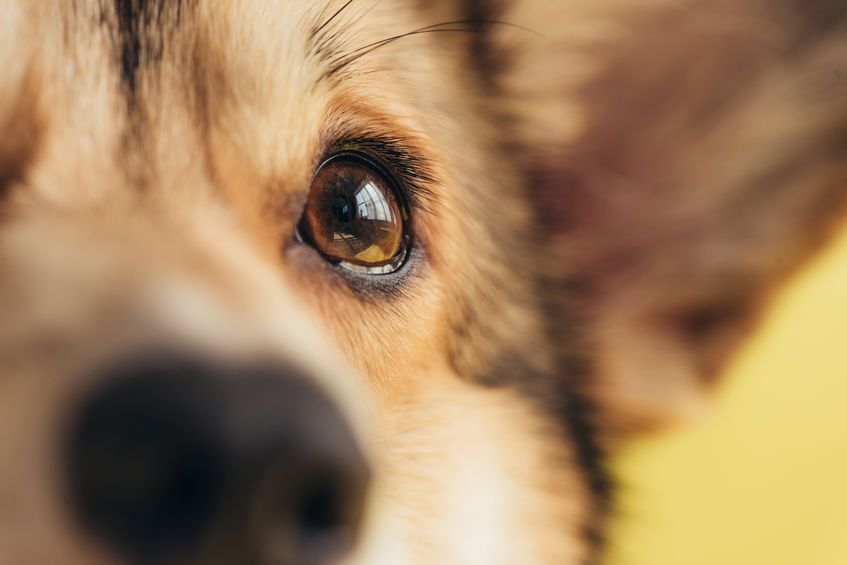 La pupille de votre animal doit être parfaitement claire.  Photo: 123rf.com