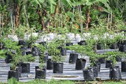 Planting crops not allowed in Kuala Langat's public areas