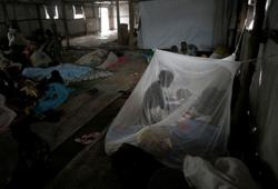 Scientists map out mosquito immune system to help fight malaria
