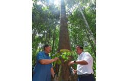 Extinct tree species found in Pelagat forest reserve