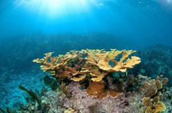 Scientists are raising corals on land and planting them on reefs