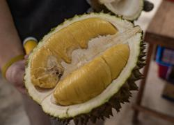 Company explains issues over durian deal in Raub (updated)