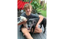 Rescued dogs in need of home