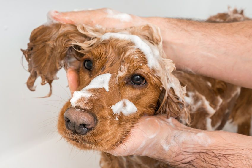 Most dogs should have a bath at least once every three months.