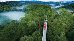 Brunei forest cover helps absorb GHG emissions; no Covid-19 cases reported