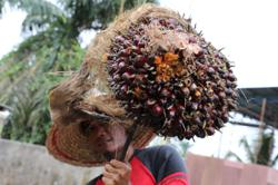 No such thing as sustainable palm oil? Yes, there is – in Malaysia