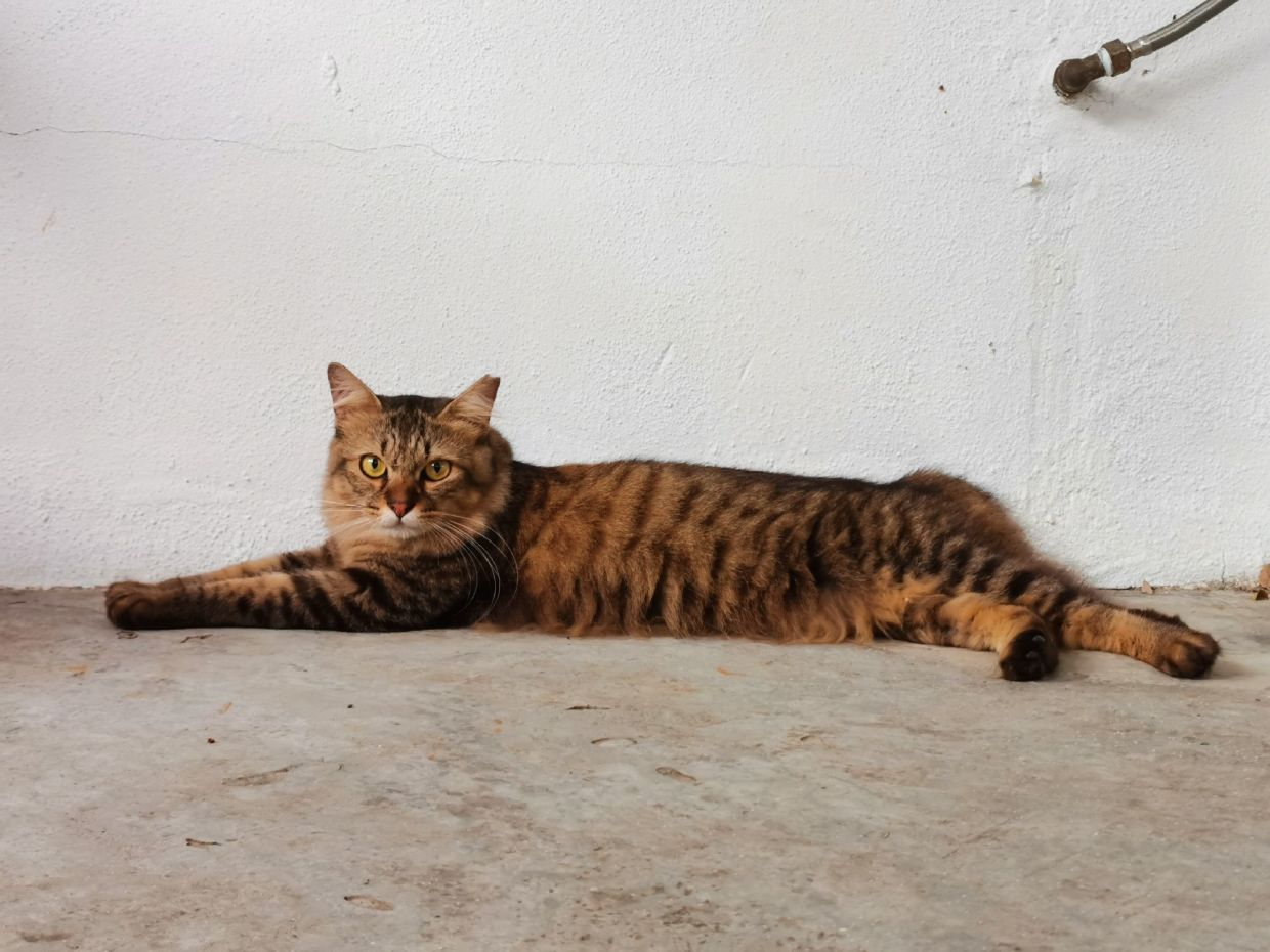 Spike is up for adoption. Photo: Lily Leng/SPCA Penang