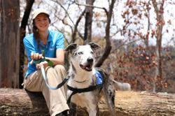 Dog called Bear leads fight to save koalas from Australian bushfires