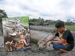 Mowgli devastated by buffalo deaths