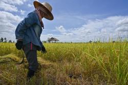 Unleash the ducks! Thai drought worries threaten farming tradition
