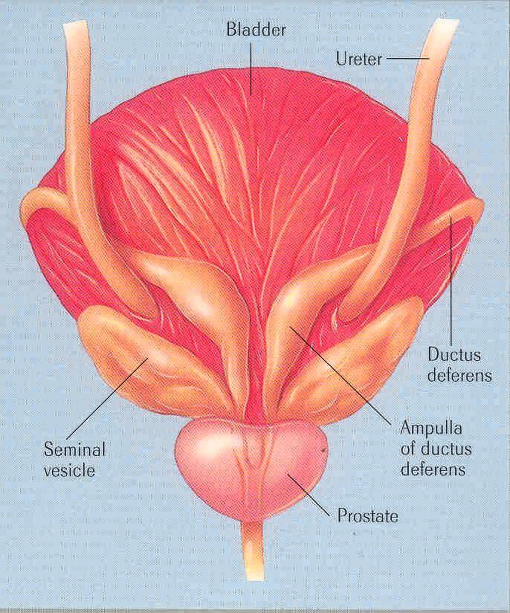 The problem with diagnosing and treating prostatitis