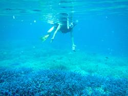 Jellyfish adventures with a dose of 'vitamin sea' in Palau