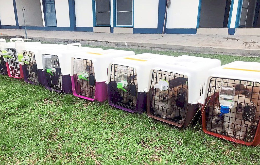 Going nowhere: Dogs of various breeds were found in eight cages inside a lorry that was transporting fruits from Thailand to Singapore.