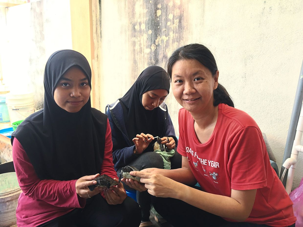 Dr Chen Pelf Nyok and her team members working to heal the rare wild terrapins known as Tuntung.