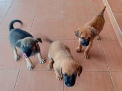 Canine welfare group holds impromptu adoption drive on Sunday