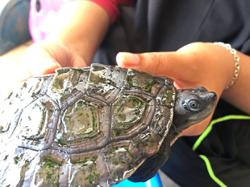 Wild Malaysian terrapins on verge of blindness are saved by social media SOS