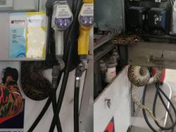 'Slithery' customer at Taman Melati petrol station