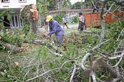 Tree felling raises eyebrows