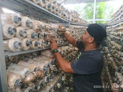 The world is his oyster for this mushroom farmer