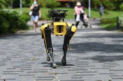 Singapore's robot dog patrols parks to remind people to wear mask, follow safe distancing