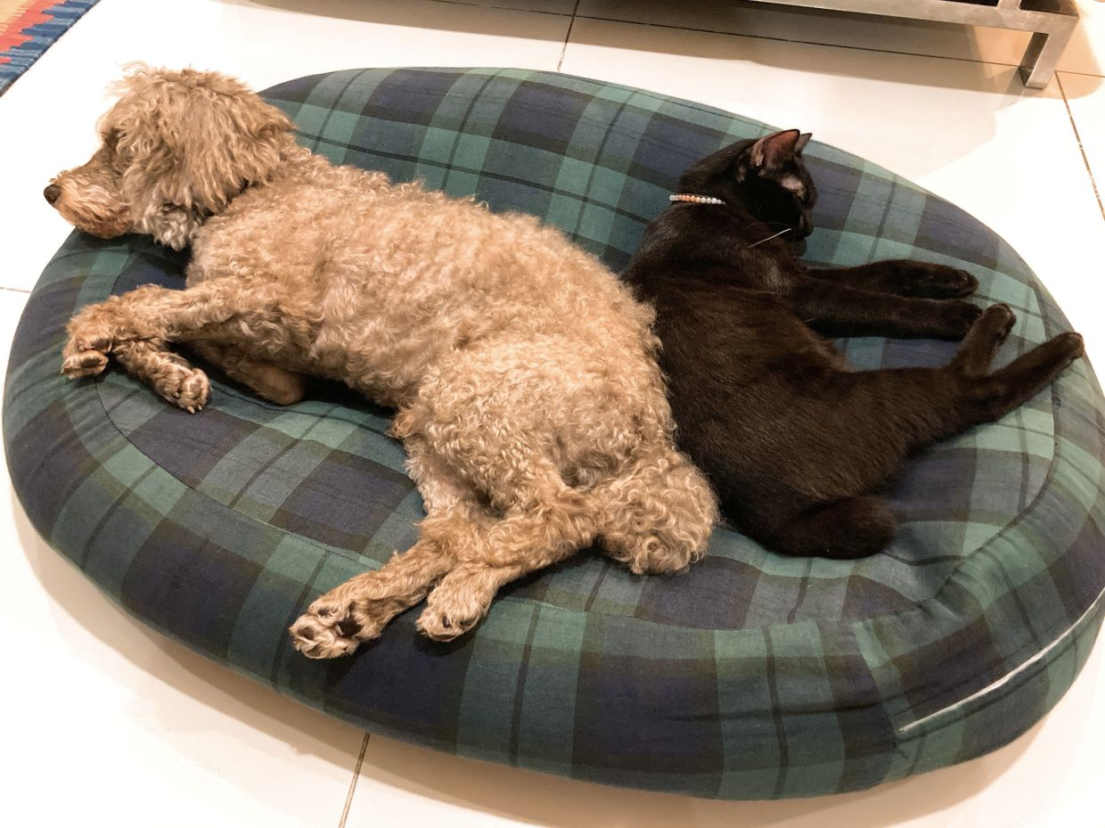 Noel (left) and Sumii get along just fine at home.
