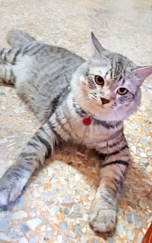 Yeoh's gentle Gracie has taken a new kitten under her wing.