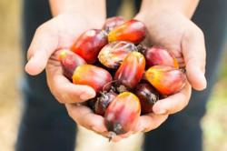 China palm oil imports may rise as reserves drop