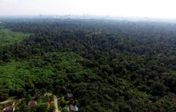 NGO coalition calls on S'gor govt to reschedule public hearing on forest reserve degazettement