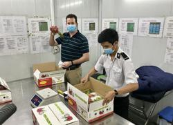 Vietnam to sort out issues with US and resume fruit exports