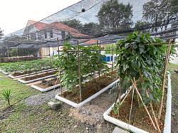 Seeing growth in communal farming