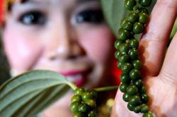 Lower pepper production expected this year