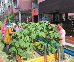 Kangkar Pulai flats residents join forces to create thriving garden