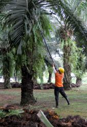 A 'new deal' for Felda
