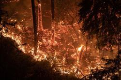Three die in Northern California wildfires, thousands evacuate
