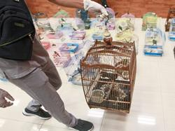 Birds worth RM300k seized from smugglers