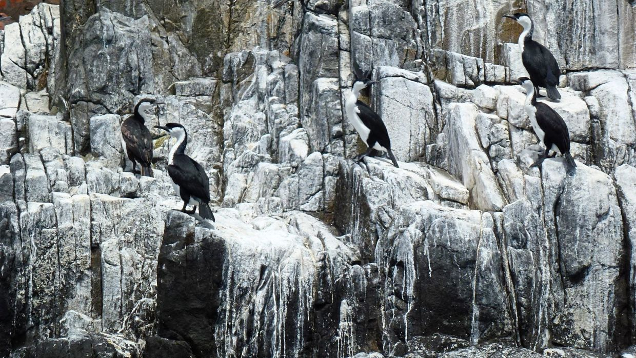 The writer got to see penguins during the trip.