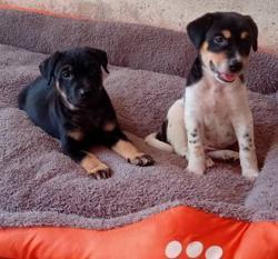 Malaysian Dogs Deserve Better holding adoption drive at Jaya One