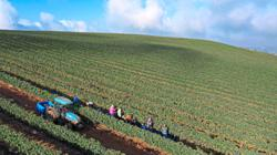 Global food production is driving pathogen transfers